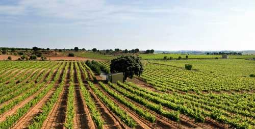 Agroanalytics acerca los beneficios del IoT, Big Data Analytics y el cloud a la producción agraria - Foto: Bodega Iniesta