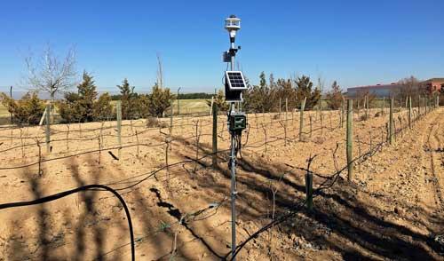 Smart Agro: Satec aplica el IoT y la agricultura de precisión en Bodegas Martúe-Blanco Nieva